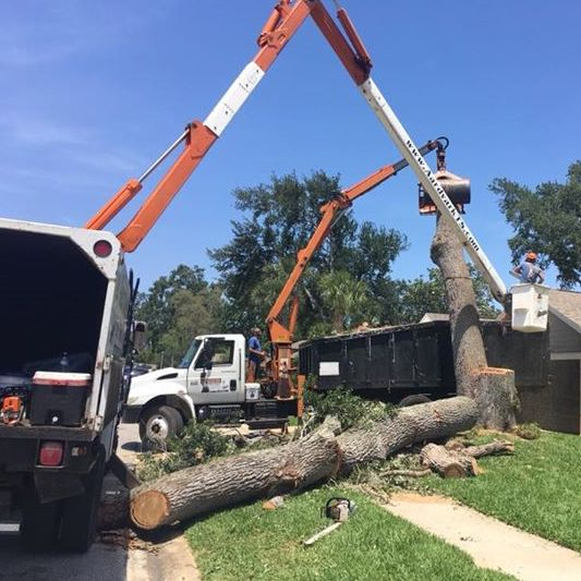 Tree Removal Daytona Beach