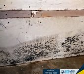 Mold inspection,