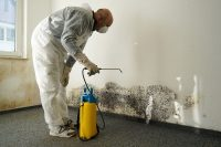 black-mold-removal