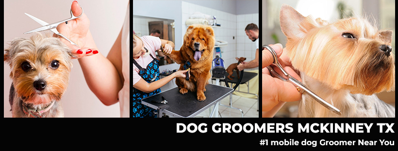 Dog-Groomers-Mckinney-Tx-Facebook-Cover-Image
