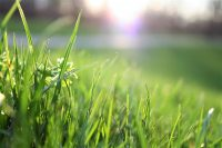 healthy landscaping grass
